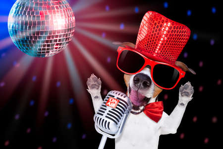 jack russell terrier: jack russell terrier dog isolated on black background singing with microphone a karaoke song in a night club, disco ball in background
