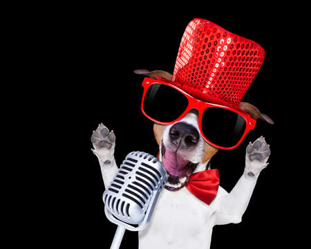 jack russell terrier dog isolated on black background singing with microphone a karaoke song in a night club