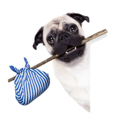 sabbatical: pug dog abandoned and left all alone on the road or street, with luggage bag  , begging to come home to owners, Stock Photo
