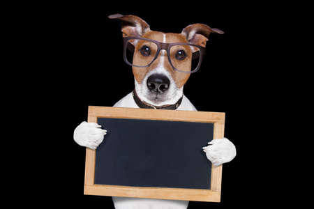 jack russell terrier dog isolated on black background holding blackboard,  with glasses , looking very smart and cool Stock Photo