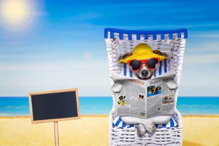 funny glasses: dog reading newspaper on a beach chair with sunglasses and yellow hat on summer vacation holidays,with blank placard or blackboard