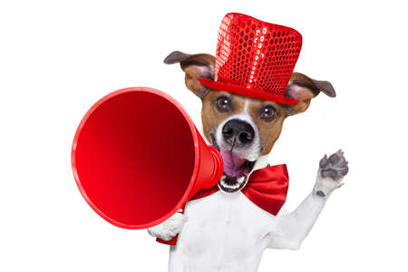 jack russell dog ,shouting  and advertising  sale discount  with retro megaphone or big microphone with party hat and tie , isolated on white background
