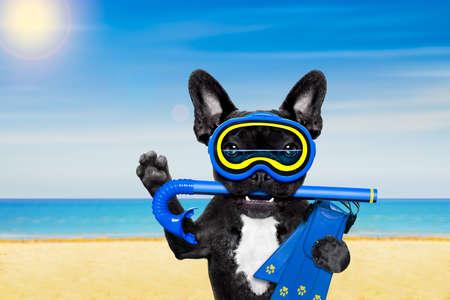 picada: buceo snorkel perro bulldog francés con la máscara y aletas, en la playa en las vacaciones de vacaciones de verano Foto de archivo
