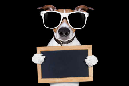 jack russell terrier dog isolated on black background looking at you  with sunglasses , holding banner and placard , very smart and cool Stock Photo