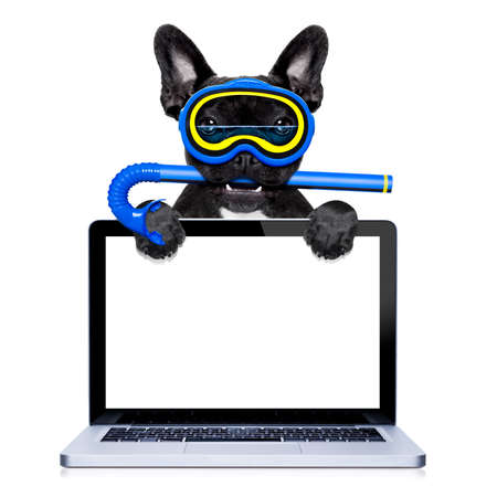 frenchie: snorkeling scuba diving french bulldog dog  with mask and fins , behind pc laptop computer screen , isolated on white background