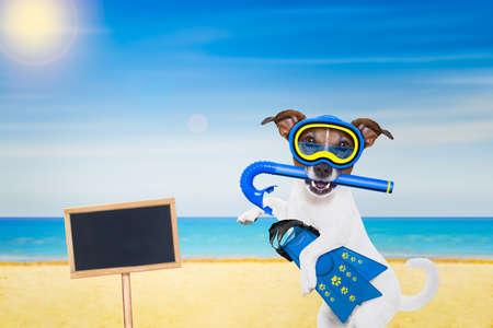 picada: jack de buceo snorkel perro Russell con la máscara y aletas, con la pizarra o cartel en la playa en las vacaciones de vacaciones de verano Foto de archivo