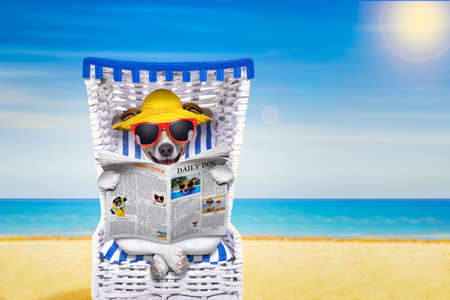 dog reading newspaper on a beach chair with sunglasses and yellow hat on summer vacation holidays, isolated on white background