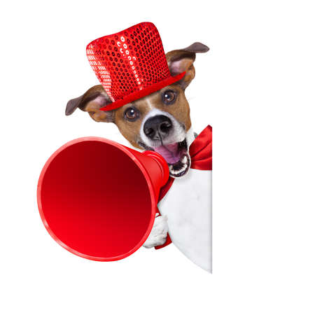 discount banner: jack russell dog ,shouting  and advertising  sale discount  with retro megaphone or big microphone behind white blank placard or banner, isolated on white background Stock Photo