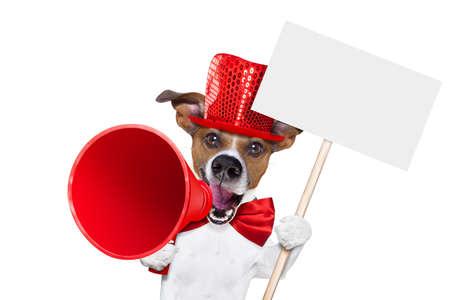 Jack Russell perro, gritos y la venta de publicidad de descuento con el megáfono retro o micrófono grande que sostiene el cartel blanco en blanco o pizarra, aislado en fondo blanco