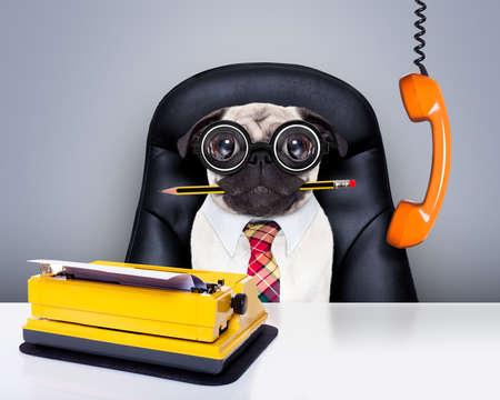 Bürokaufmann Mops Hund als Chef und Koch, mit Schreibmaschine als Sekretärin, sitzen auf Lederstuhl und Schreibtisch, in der Notwendigkeit für den Urlaub