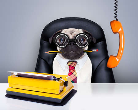 bored: office businessman pug dog  as  boss and chef , with typewriter as a secretary,  sitting on leather chair and desk, in need for vacation