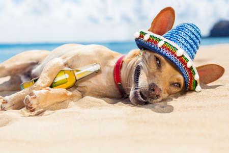 perro chihuahua que se relaja y descansa, borracho en la arena en la playa en las vacaciones de verano de vacaciones, orilla del mar detrás Foto de archivo
