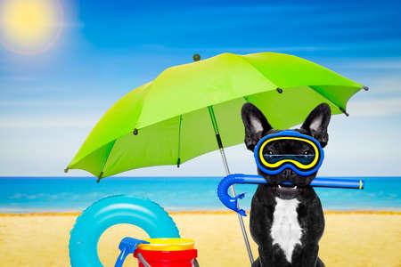 picada: buceo snorkel perro bulldog francés con la máscara y aletas y un paraguas, en la playa, orilla del mar y el sol como fondo