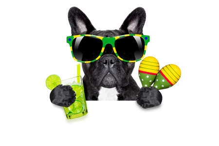 brazilian caribbean: brazil  caipirinha cocktail french bulldog dog enjoying summer vacation holidays, behind  blank empty blackboard or placard, isolated on white background