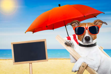 sun beach: jack russell dog at the beach on a hammock ,  relaxing on summer vacation holidays, with placard or blackboard, ocean shore and sun as background Stock Photo