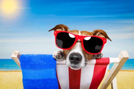 hamaca: perro Jack Russell en la playa en una hamaca, relajarse en las vacaciones vacaciones de verano, orilla del mar y el sol como fondo Foto de archivo