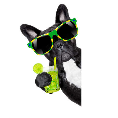 brazilian caribbean: brazil  caipirinha cocktail french bulldog dog enjoying summer vacation holidays, beside blank empty banner or placard, isolated on white background