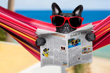 french fancy: french bulldog dog relaxing on a fancy red  hammock  with red sunglasses reading newspaper or  magazine,  on summer vacation holidays at the beach
