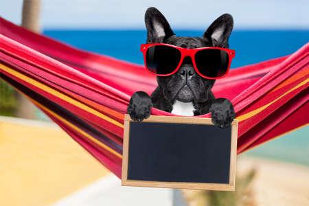 フレンチ ブルドッグ犬の派手な赤いハンモック空白横断幕やプラカード、ビーチで夏の休暇の休日に、黒板でリラックス