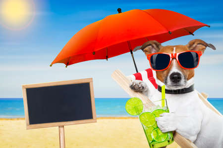 sunglasses: jack russell dog at the beach on a hammock , with cocktail drink glass,  relaxing on summer vacation holidays, ocean shore and sun as background
