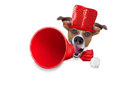 Jack Russell hond, schreeuwen en reclame verkoop korting met retro megafoon of grote microfoon achter witte lege plakkaat of banner, geïsoleerd op een witte achtergrond