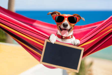 relaxing beach: jack russell dog relaxing on a fancy red  hammock  with blank banner, placard or blackboard,  on summer vacation holidays at the beach