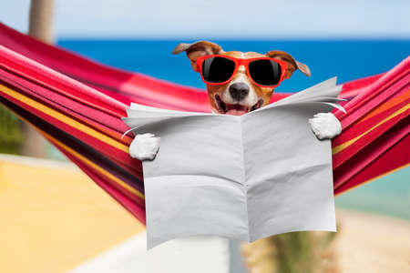summer dog: jack russell dog , reading blank newspaper on hammock at the beach at summer vacation holidays, wearing funny sunglasses
