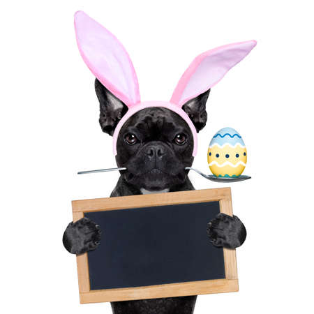 french bulldog dog with   spoon in mouth with easter  egg and easter  bunny ears ,holding blank blackboard or placard,  isolated on white background