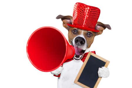 Jack Russell hond, schreeuwen en reclame verkoop korting met retro megafoon of grote microfoon die witte lege plakkaat of bord, op een witte achtergrond Stockfoto
