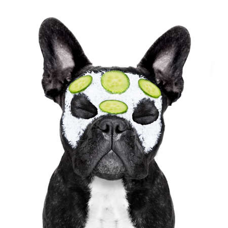 body grooming: french bulldog dog relaxing  with beauty mask in   spa wellness center ,getting a facial treatment with  moisturizing cream mask and cucumber ,sleeping  with closed eyes