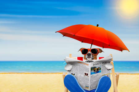 jack russell dog reading newspaper on a beach chair or hammock  with sunglasses under umbrella , on summer vacation holidays Stockfoto
