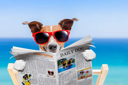jack russell dog , reading newspaper on hammock at the beach at summer vacation holidays, wearing funny sunglasses Stock Photo