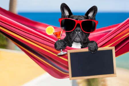 resor: Fransk bulldogghund avkopplande på en snygg röd hängmatta med solglasögon och martini cocktaildrink, på sommarsemester på stranden