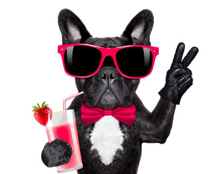 Bulldog francés con batido de cóctel batido y vidrios divertidos con dedos de la victoria de la paz, aislado en fondo blanco Foto de archivo - 52998025