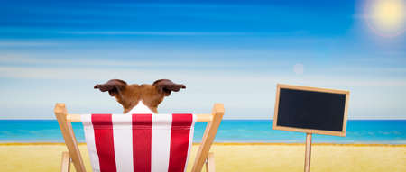 jack russell dog on a beach chair or hammock at the beach relaxing on summer vacation holidays, ocean shore as background, blackboard or placard included
