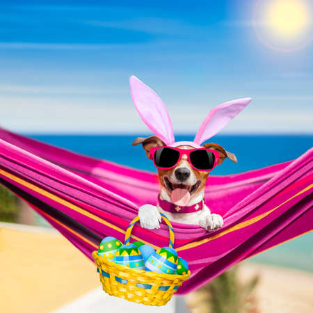 jack terrier: jack russell dog on a hammock , during easter holidays, with bunny ears, at the beach