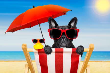 francés bulldog en una silla de playa o una hamaca en la playa de relax en vacaciones de vacaciones de verano, orilla del mar como fondo, con el paraguas rojo