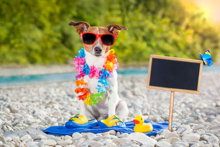 jack russell dog on summer vacation holidays at the river, rubber duck and placard or blackboard included