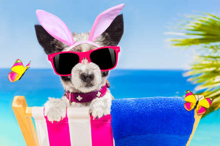 terrier dog on a hammock , during easter holidays, with bunny ears, at the beach, egg basket included