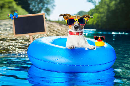 dog on  blue air mattress  in water refreshing on summer vacation holidays at the beach or river, blackboard or placard included