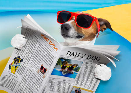 jack russell dog reading a newspaper or magazine, at the beach on summer vacation hiolidays, relaxing and resting Stock Photo