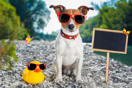 humour: jack russell dog on summer vacation holidays at the river, rubber duck and placard or blackboard included Stock Photo