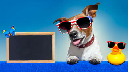 a placard: jack russell dog with placard or blackboard, at the beach  relaxing on summer vacation holidays
