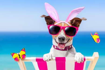 잭 러셀 강아지는 토끼 귀와 해변에서 부활절 휴일 동안 그물 침대에