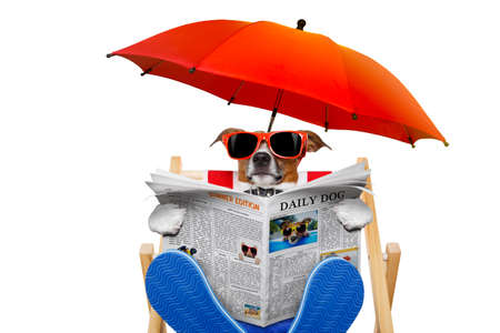 jack russell dog reading newspaper on a beach chair or hammock  with sunglasses under umbrella , on summer vacation holidays, isolated on white background Stockfoto