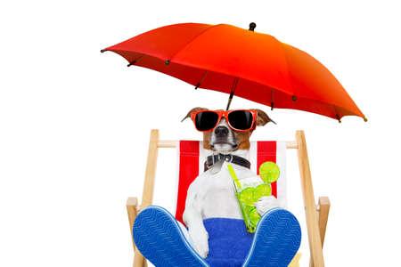Jack Russell cane con cocktail caipirinha su una sedia a sdraio con occhiali da sole sotto l'ombrello, in vacanza vacanza estive isolato su sfondo bianco Archivio Fotografico - 53677086