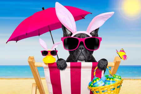 buldog: francés bulldog en una hamaca, durante las vacaciones de Pascua, con orejas de conejo, en la playa, en la primavera de Foto de archivo