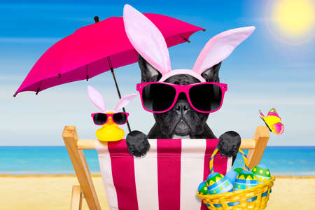 Franse bulldog hond op een hangmat, tijdens de paasvakantie, met bunny oren, op het strand, in het voorjaar