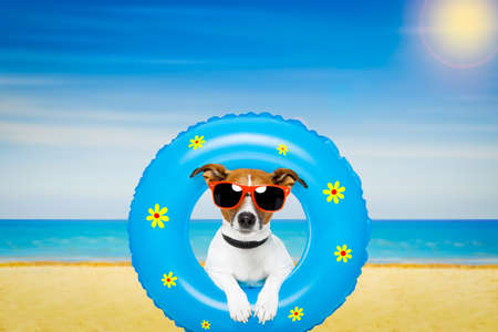 jack russell dog relaxing on air mattress, with sunglasses  on summer vacation holidays at the beach