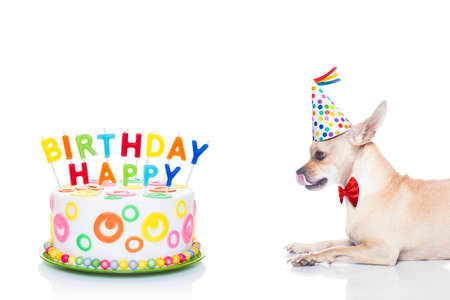 smack: chihuahua dog  hungry for a happy birthday cake with candels ,wearing  red tie and party hat  , isolated on white background